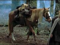 Bill le poney